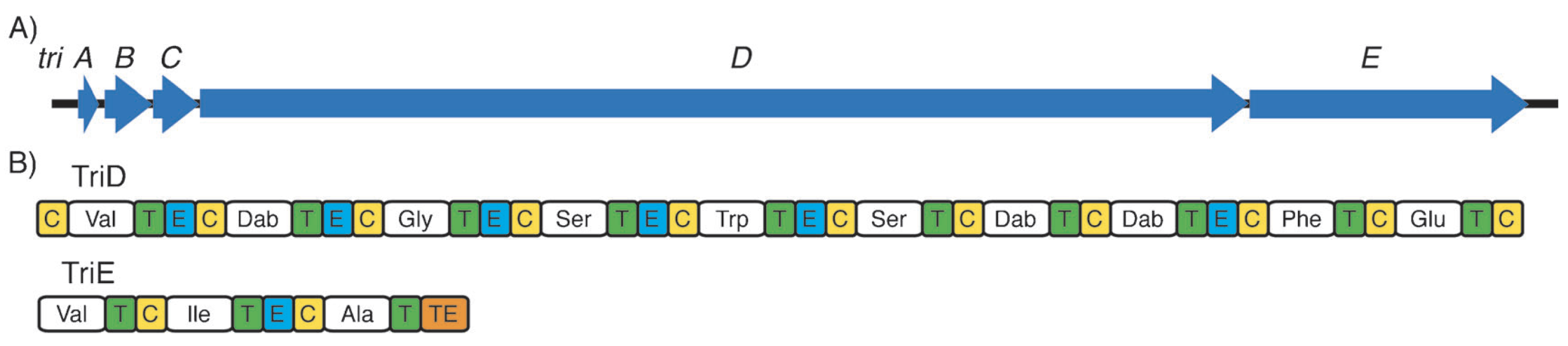Publications figure showing putative tridecaptin A1 non-ribosomal peptide synthetase gene cluster